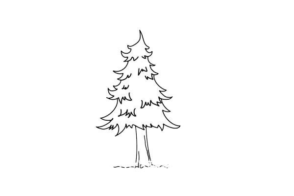 儿童简笔画松树画法步骤图 中级简笔画教程-第5张
