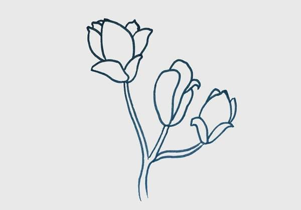玉兰花简笔画步骤画法图片 初级简笔画教程-第3张