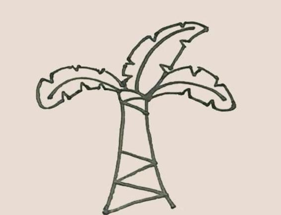 芭蕉树简笔画的画法步骤图教程 中级简笔画教程-第7张