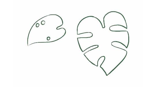 龟背竹简笔画,绿色植物儿童简笔画 初级简笔画教程-第3张