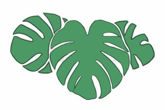 龟背竹简笔画,绿色植物儿童简笔画 初级简笔画教程-第7张