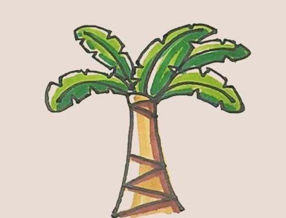 芭蕉树简笔画的画法步骤图教程 中级简笔画教程-第1张