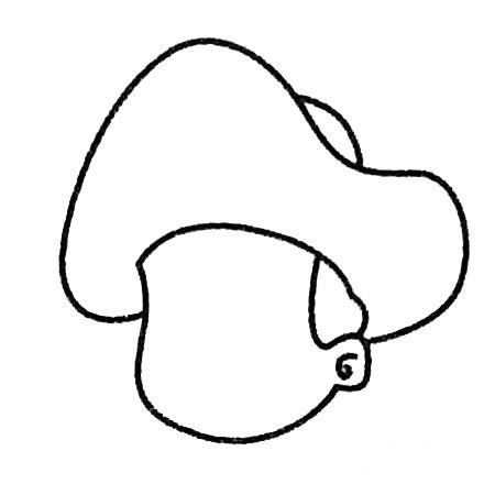 海盗头像简笔画的画法步骤 人物-第4张