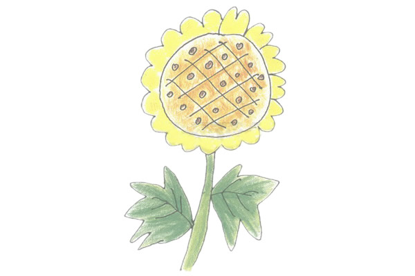 向日葵简笔画的画法步骤图教程 植物-第5张