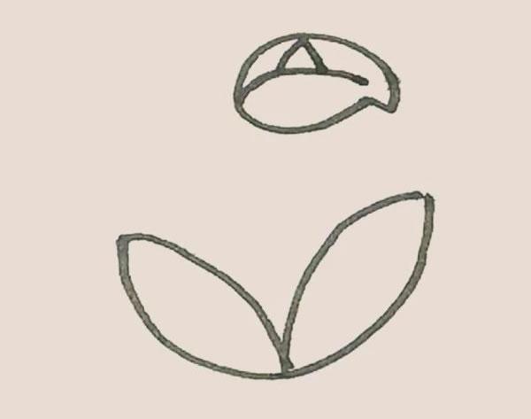 马蹄莲植物简笔画 中级简笔画教程-第4张