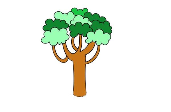 大树简笔画,桉树简笔画画法步骤教程 中级简笔画教程-第1张