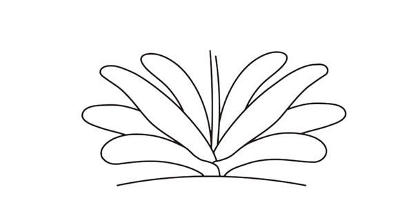 君子兰花彩色画法简笔画 中级简笔画教程-第4张