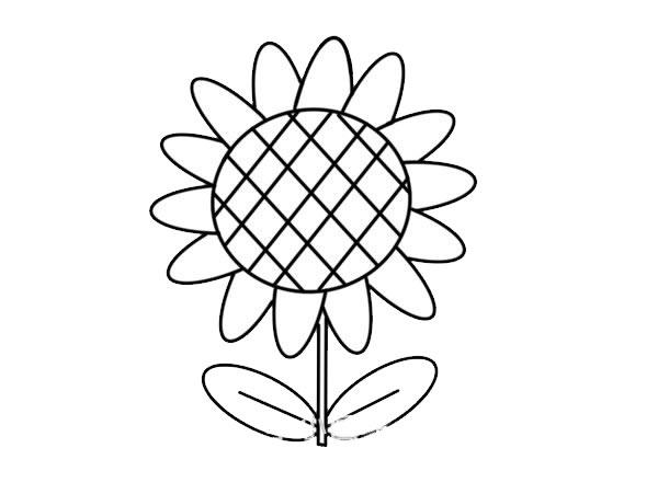 简单易学的向日葵彩色简笔画 初级简笔画教程-第5张