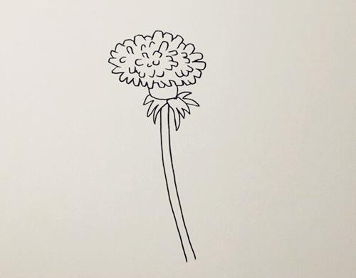 蒲公英怎么画,儿童简笔画蒲公英 中级简笔画教程-第2张