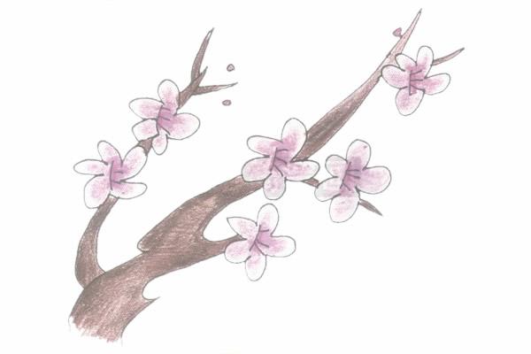 梅花简笔画的画法步骤图教程 中级简笔画教程-第5张