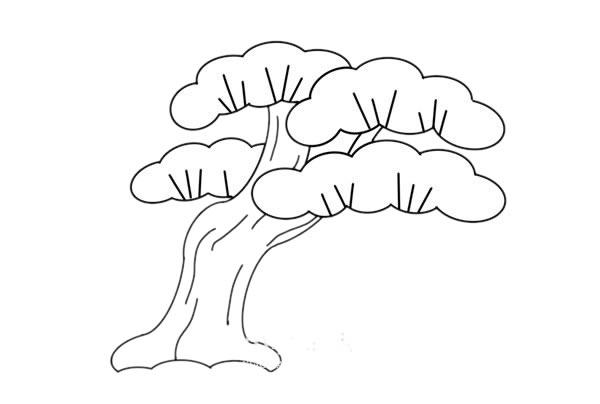 彩色松柏简笔画画法步骤教程 中级简笔画教程-第5张