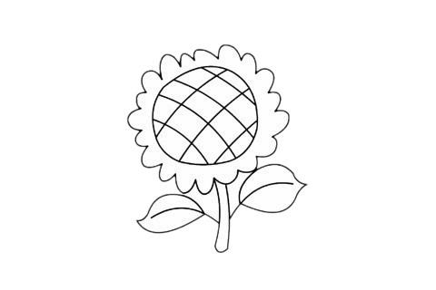 向日葵简笔画简单画法步骤教程及图片大全 植物-第1张