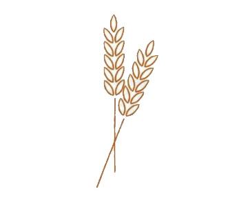 麦穗简笔画,小麦简笔画怎么画 中级简笔画教程-第3张