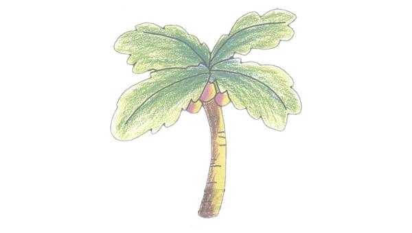 椰子树简笔画的画法步骤图教程 植物-第1张