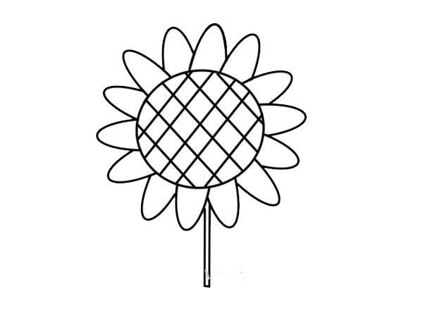 简单易学的向日葵彩色简笔画 初级简笔画教程-第4张