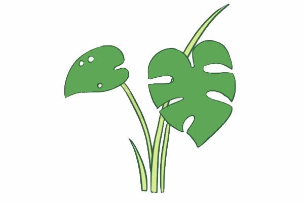 龟背竹简笔画,绿色植物儿童简笔画 初级简笔画教程-第5张