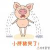儿童睡前故事《小胖猪哭了》